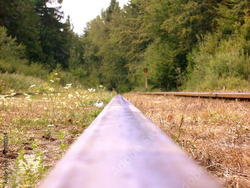 Foto op Plexiglas Weg in bos Rails