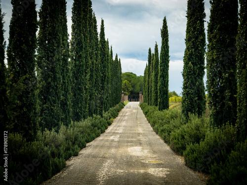 Deurstickers Toscane Cypress Entrance