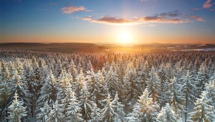 Sonnenuntergang über dem Winterwald