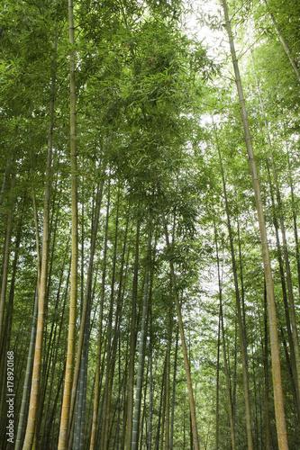Fotobehang Bamboe beauty in Taiwan