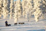 Husky dog sledding in Lapland, Finland - 178928586