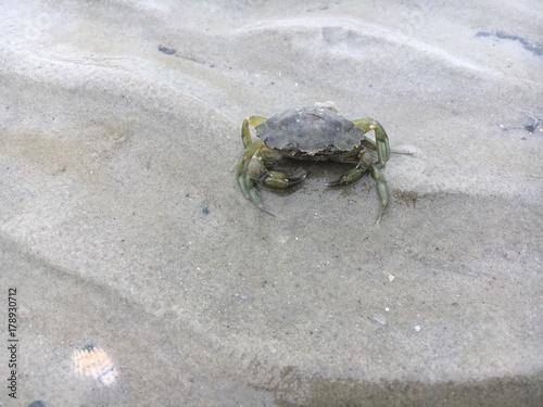 Fotobehang Noordzee Großer Krebs bei Ebbe am Sandstrand
