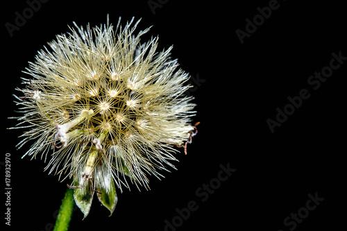 Fotobehang Paardebloemen Grass flower.