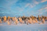 Snowy landscape, frozen trees in winter in Saariselka, Lapland, Finland - 178933947