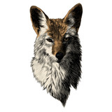 coyote sketch head vector graphics color picture