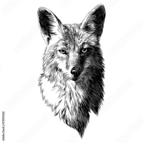 Fototapeta coyote sketch head vector graphics monochrome black and white drawing