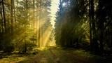 jesień w lesie Warmii © januszlipinski
