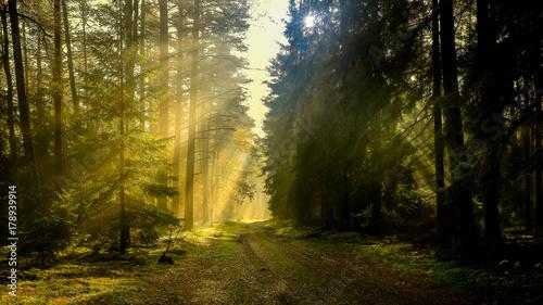 Fotobehang Weg in bos jesień w lesie Warmii