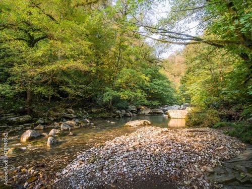 Papiers peints Rivière de la forêt stream