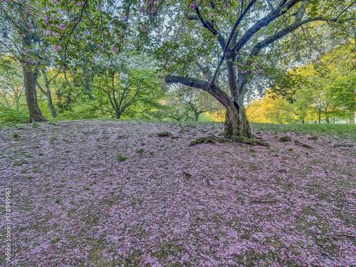 Papiers peints Lavende Central Park, New York City spring