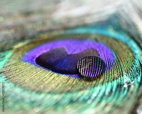 Fotobehang Pauw Peacock feather background