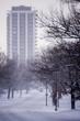 Snow Covered - Walnut Hills, Cincinnati, Ohio
