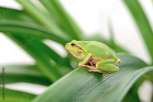 Fotobehang Kikker frog sitting on a leaf