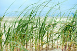 Nordsee, Strand auf Langenoog: Dünen, Meer, Entspannung, Ruhe, Erholung, Ferien, Urlaub, Meditation :) - 178973186
