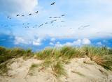Langeoog, Fliegen, Freiheit, Urlaub, Entspannung: Wildgänse an einer Ostseeküste :) - 178974734