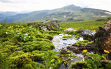 Mountain spring water flowing with green moss vegetation and yellow flowers, alpine fresh clean water spring