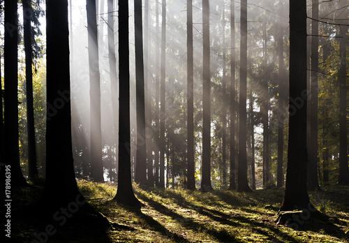 Fotobehang Grijze traf. Morning forest