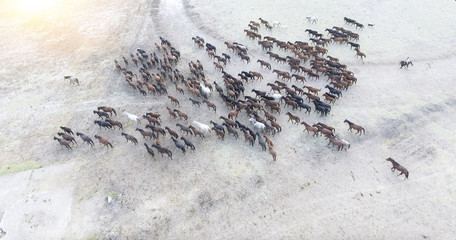 Top view aerial photo from drone of a plain with beautiful horses in sunny summer day in Turkey. Herd of thoroughbred horses. Horse herd run fast in desert dust against dramatic sunset sky.