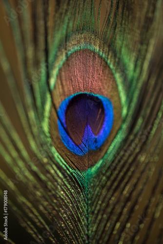 Fotobehang Pauw Peacock feather detail 2