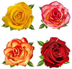 Fresh beautiful rose isolated on white background with clipping path set
