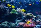 Underwater scene. Coral reef, colorful fish groups - 179024561