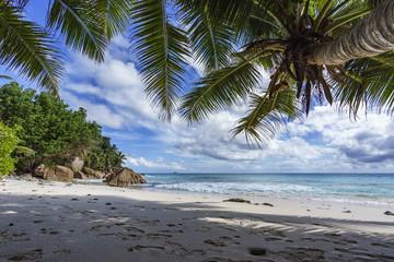 Palm trees on paradise beach at anse patates, la digue, seychelles 4