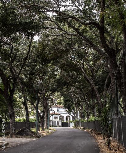 Tuinposter Weg in bos Camino de arboles