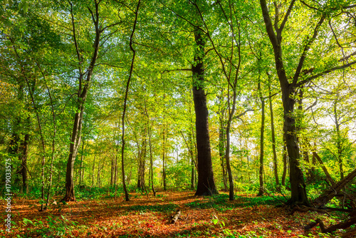Fotobehang Herfst Beautiful scene in an autumnal forest