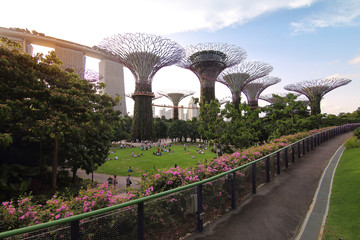 Singapore - July 30, 2017: Supertrees grove in Gardens by the Bay in Singapore center at Supertree Groveis is main Marina Bay Sands district very popular attraction for tourists.