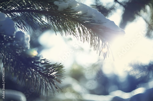 Aluminium Winterlandschap Frozen tree