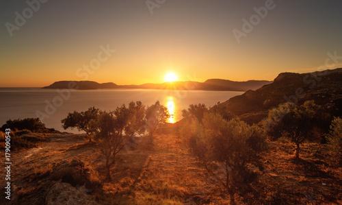 Fotobehang Diepbruine Olivenbäume im Licht der untergehenden Sonne