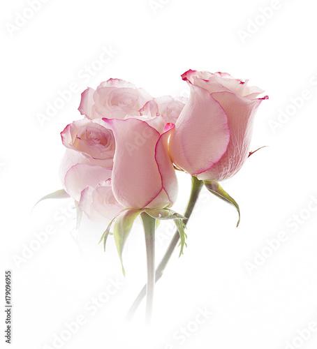 rosas aisladas