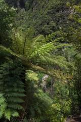 Karangahake Gorge New Zealand