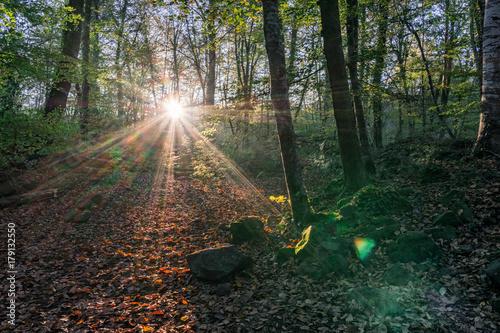 Foto op Plexiglas Weg in bos Bosque iluminado