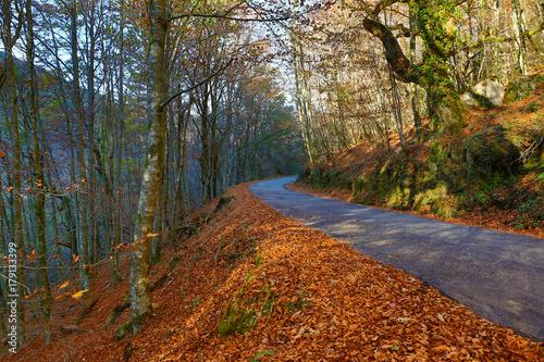 Aluminium Herfst Autumn