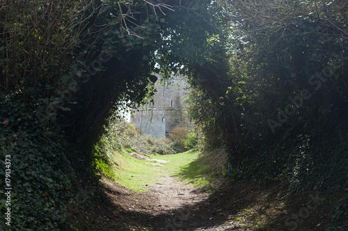 Foto op Plexiglas Weg in bos Chemin dans les bois