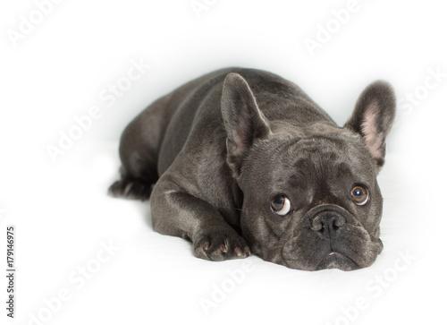 Deurstickers Franse bulldog I Am Sorry