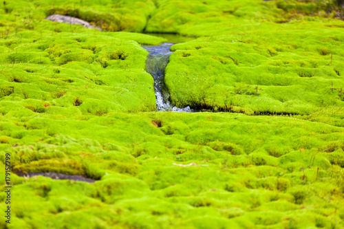 Aluminium Lime groen Iceland Small River Stream with green moss