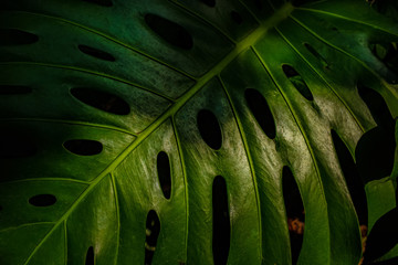 Detail of tropical plant leaf