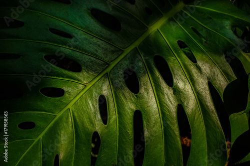 Detail of tropical plant leaf