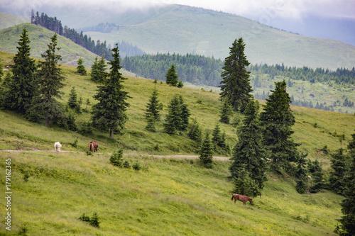 Papiers peints Pistache Walking tour through the romanian countryside, mountains, villages, waters. Holidays in carpathian nature.