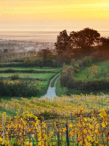 Foto op Plexiglas Ochtendgloren Sonnenaufgang bei den Hügeln am Neusiedlersee