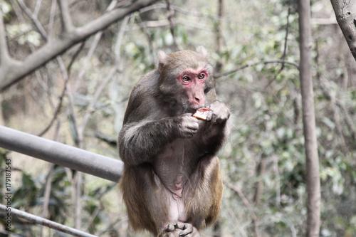 Aluminium Aap Monkey meal