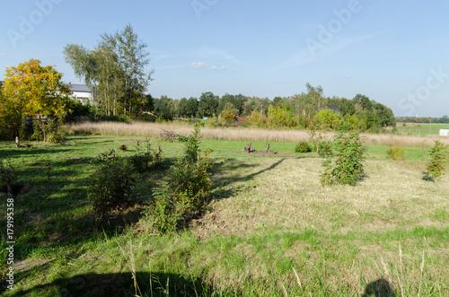 Foto op Canvas Pistache Działka karczowana z drzew, zdjęcie latem.