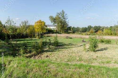 Foto op Plexiglas Pistache Działka karczowana z drzew, zdjęcie latem.