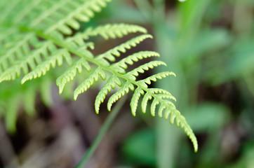 Zdjęcie makro roślin pospolitych na łące.