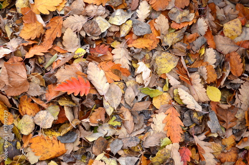 yellow and red fallen leaves on the ground, texture, background
