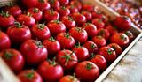 Fresh organic tomatoes product pattern