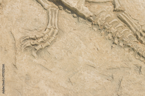 Plagát Replica dinosaur fossil on the wall
