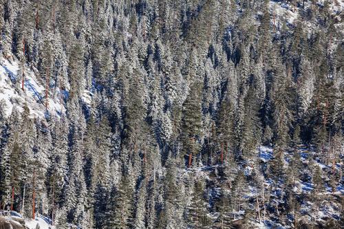 Aluminium Winterlandschap Winter forest